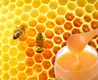 The Royal Jelly Benefits